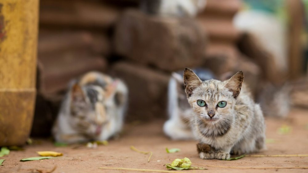 Local cats in neighborhood. Photography by @royal_pixels